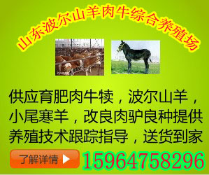供应牛舍建设 牛场规划图 养牛场建设标准 山