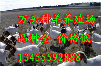 圈养羊舍建设设计图圈养羊品种 嘉祥县为民养