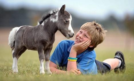 宠物马多少钱一匹 怎样养殖宠物马 哪里销售宠物马