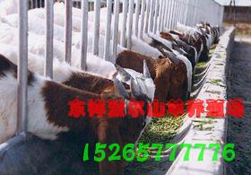 供应波尔山羊羊舍建造多少钱 山东牧惠肉牛肉