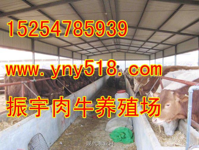 供应养牛场怎么规划 养牛场建设图 山东振宇