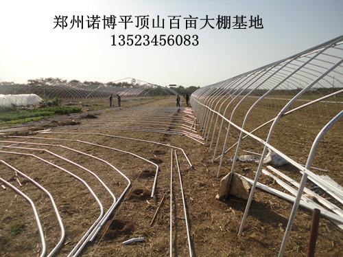 钢架大棚价格_大棚钢架钢结构设计钢架大棚造价大棚骨架